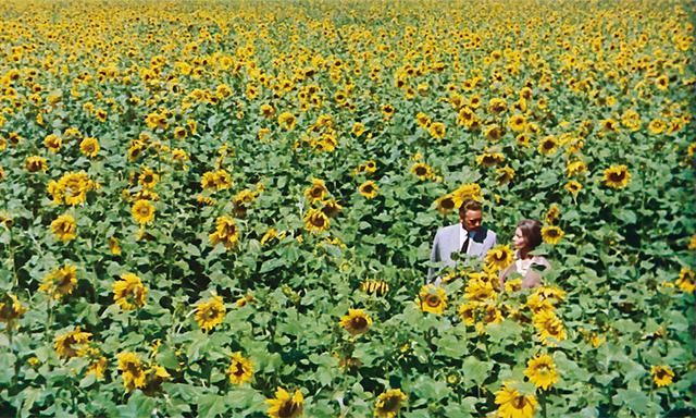 画像: ひまわりの黄色は愛し合う「喜び」 「ひまわり」(1970)