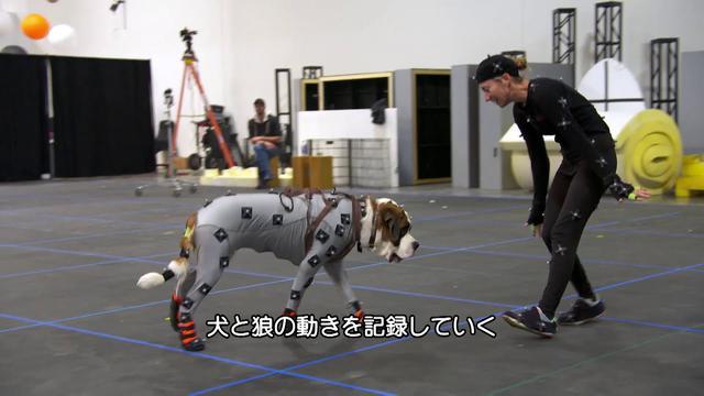 画像: 『野性の呼び声』ブルーレイ+DVDセット 名犬バックを描く犬たちの動き youtu.be