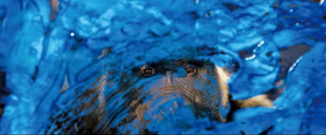 画像: 1.動物たちの多彩な表情