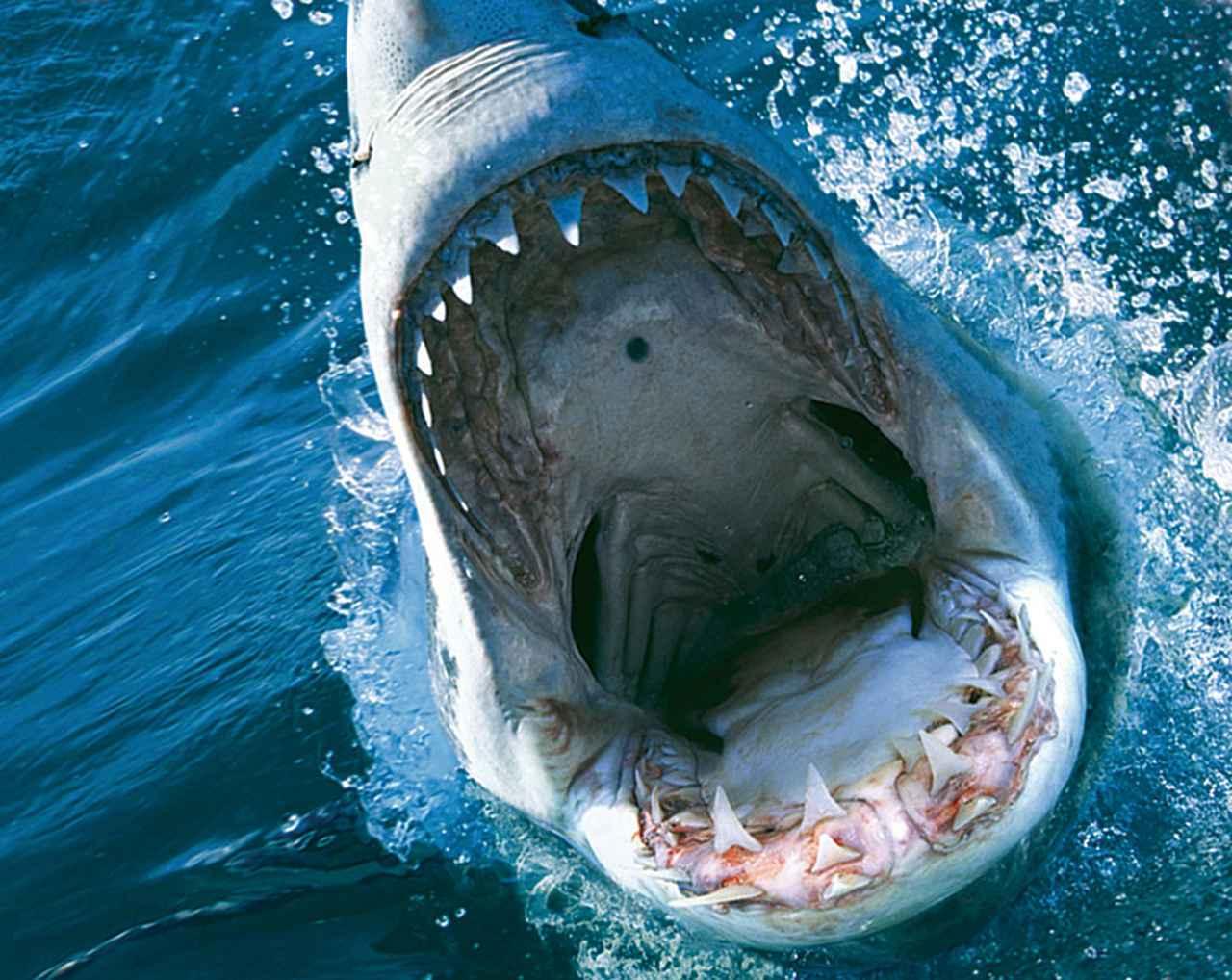 """画像: 映画界のスター""""サメ""""の恐怖に原点回帰した「ディープ・ブルー3」"""