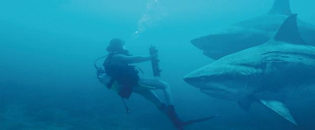 画像: 人間の言葉や行動を理解する知的なサメたちが登場