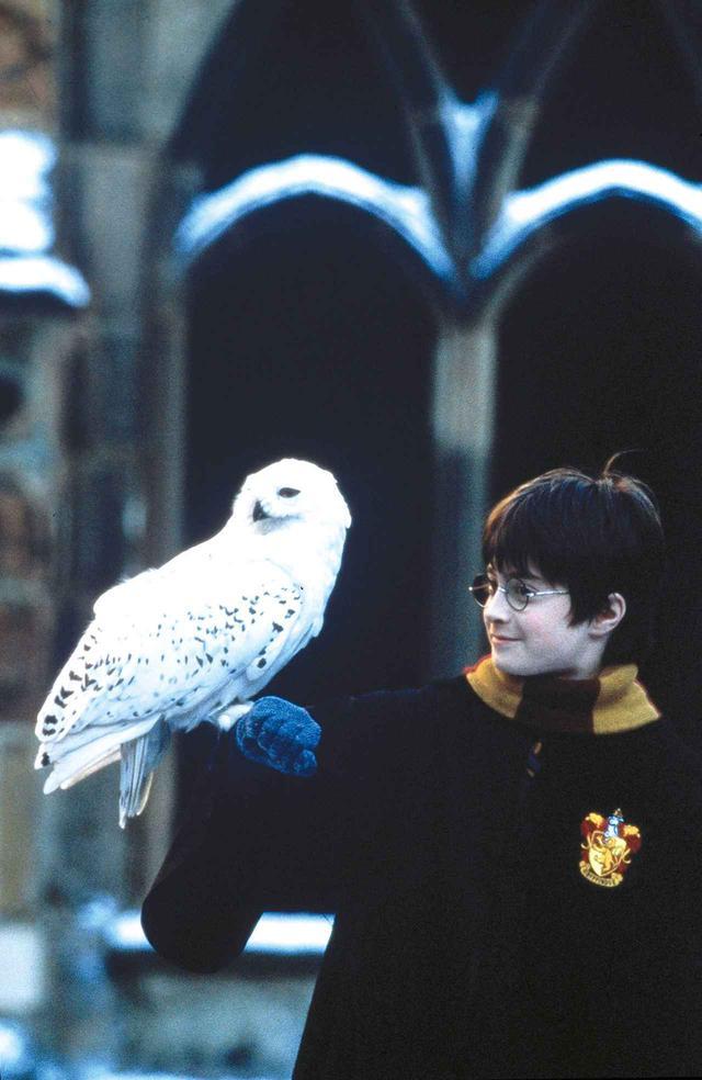 画像: 「ハリー・ポッターと賢者の石」より