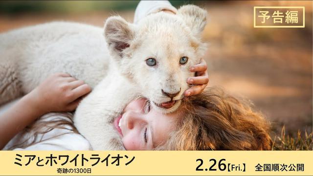 画像: 映画『ミアとホワイトライオン 奇跡の1300日』予告編 2021年2月26日(金)公開 www.youtube.com