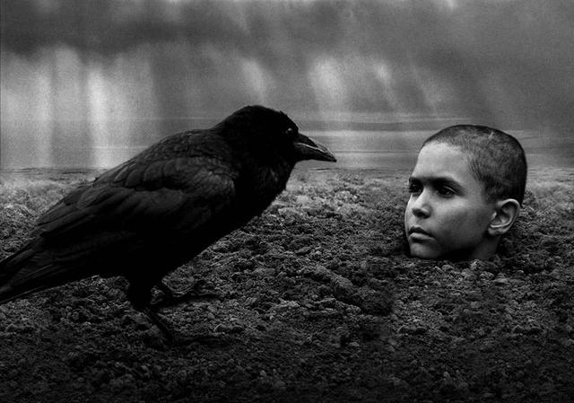 画像: 第15位 「異端の鳥」(2019)
