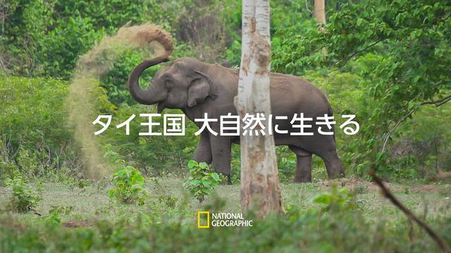 画像: タイ王国 大自然に生きる - 予告編 |ナショジオ www.youtube.com