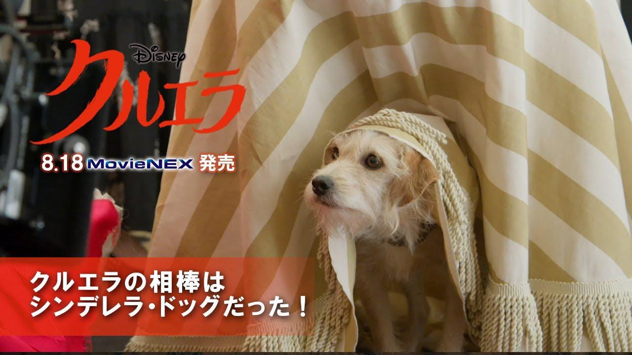 画像: 「クルエラ」8/18 MovieNEX 発売 クルエラの相棒はシンデレラ・ドッグだった! www.youtube.com