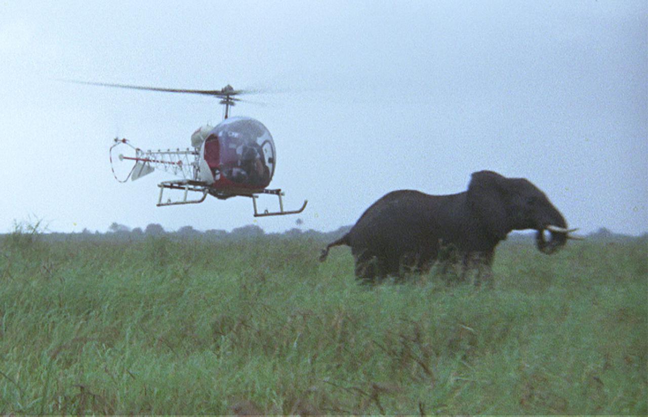 画像: 『さらばアフリカ』