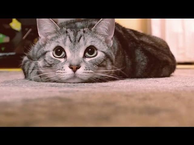 画像: #猫バンバン PROJECT MOVIE by NISSAN #KnockKnockCats youtu.be