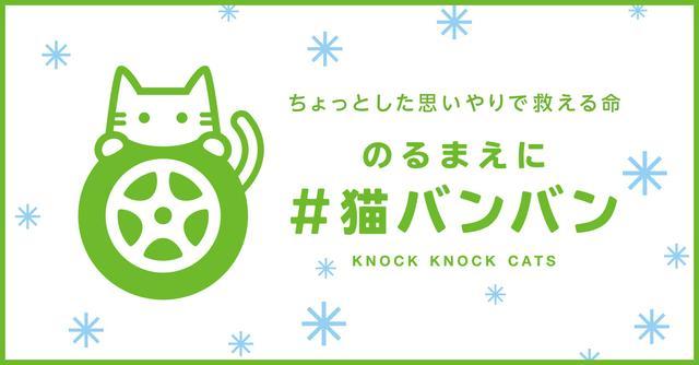 画像: 日産:#猫バンバンプロジェクト 猫も人も安心して過ごせる社会のために。