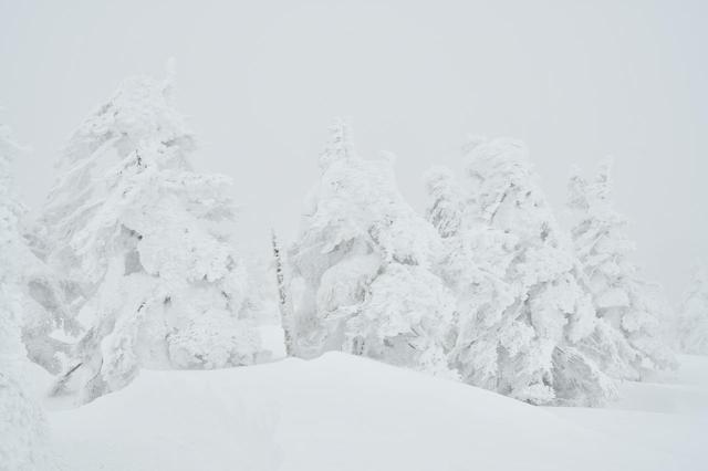 画像: 生まれて初めて見た樹氷。前日の雨でちょっと小さくなっていたが、それでもこの迫力。「スノーモンスター」の異名そのもの。