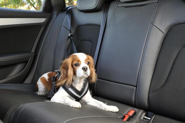 画像: ペットとドライブに行く際にはケージを用意したり、ペット用のシートベルトを装着したりして、安全にはきちんと留意しよう。