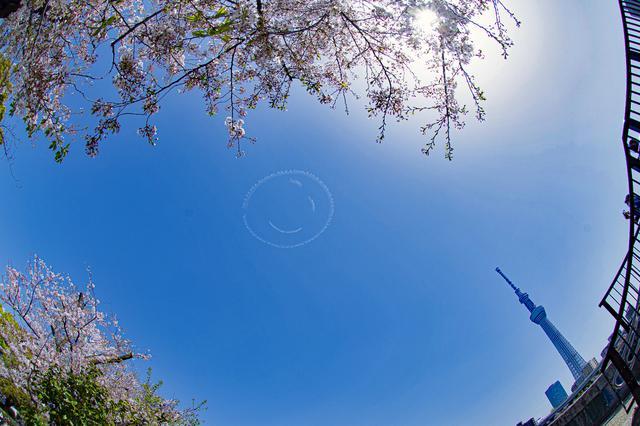 画像: まだ桜の残る東京都内、スカイツリー上空に描かれたニコちゃんマーク。(Taro Imahara PATHFINDER)