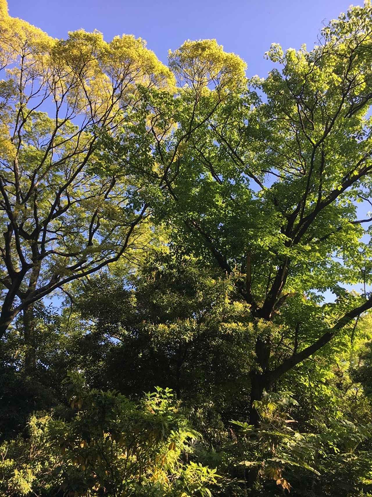 画像2: 壮観な景色!三百年の松