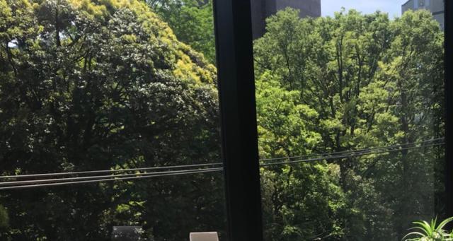 画像: 窓からは都心とは思えない豊かな緑を眺められるオフィス