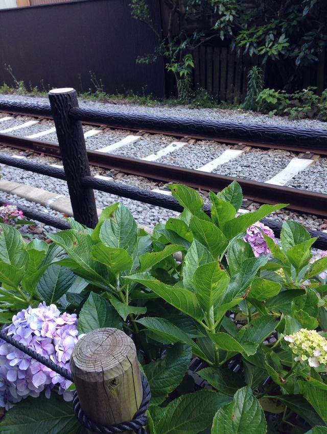 画像: 有名な「あじさい電車」