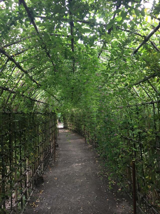 画像2: 名物の萩のトンネル