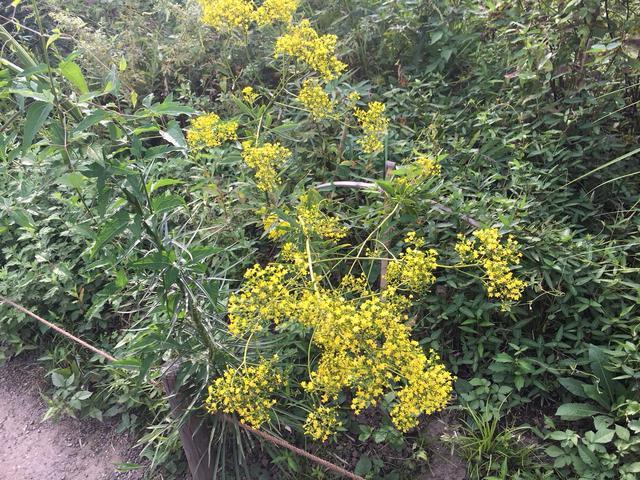 画像3: 園内には約600種の植物が!