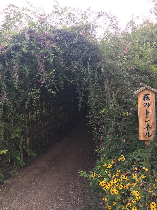 画像1: 名物の萩のトンネル