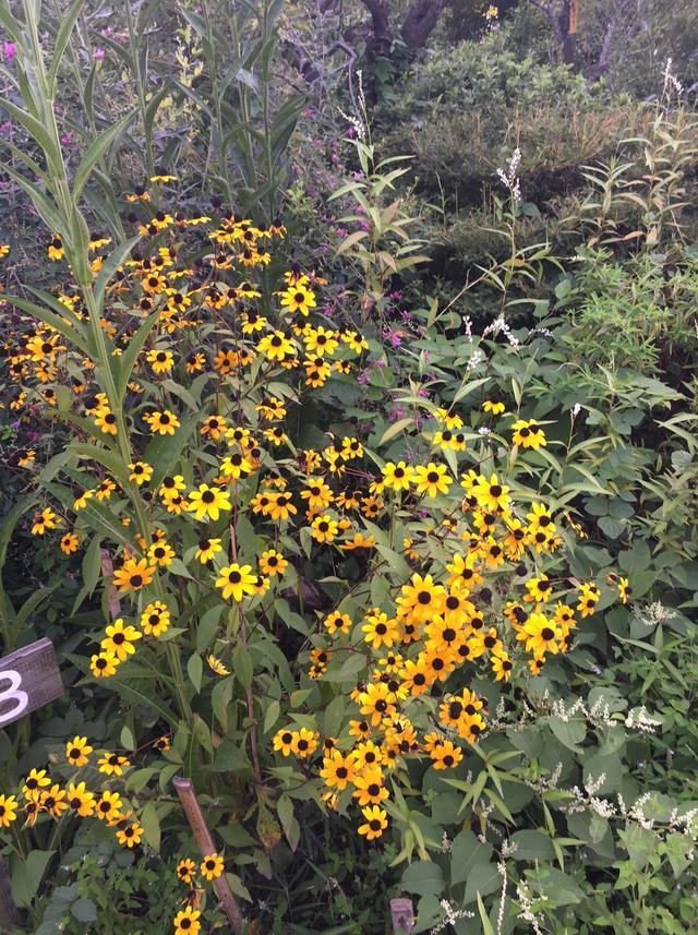 画像2: 園内には約600種の植物が!