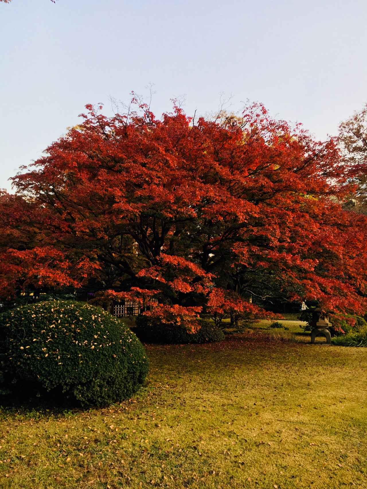 画像2: 日本庭園で秋の自然を満喫