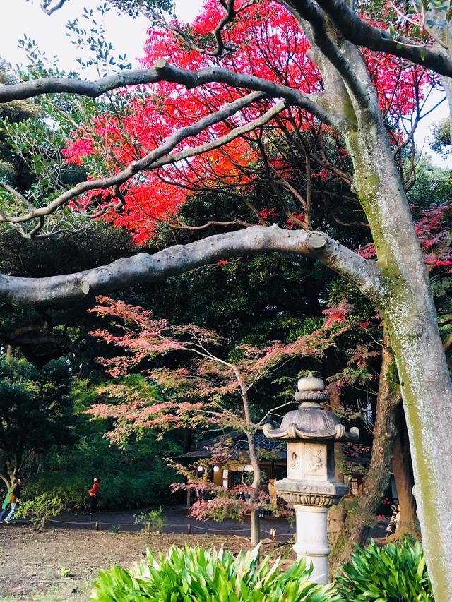 画像3: 日本庭園で秋の自然を満喫