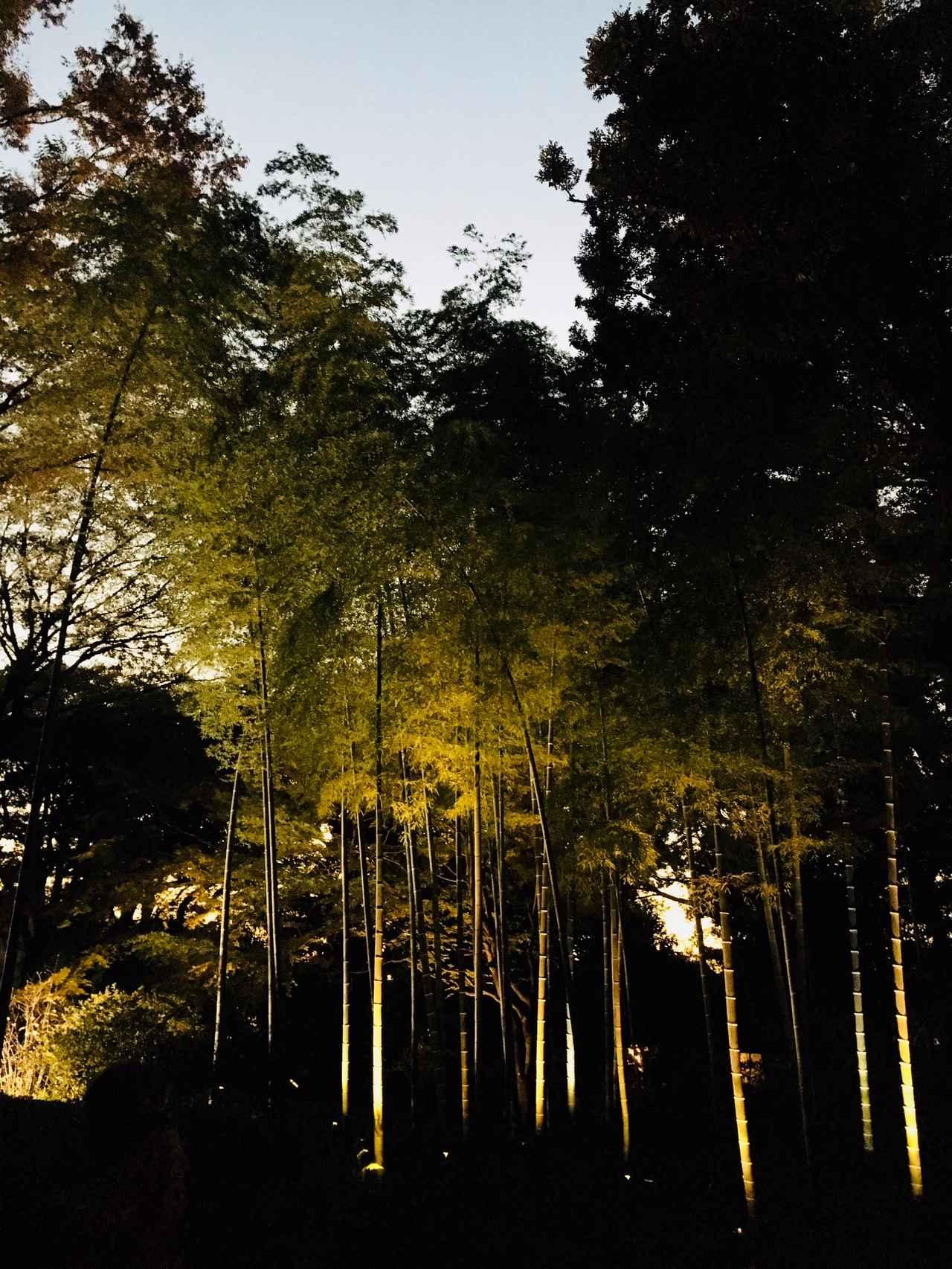 画像3: 夕方になりライトアップ開始!