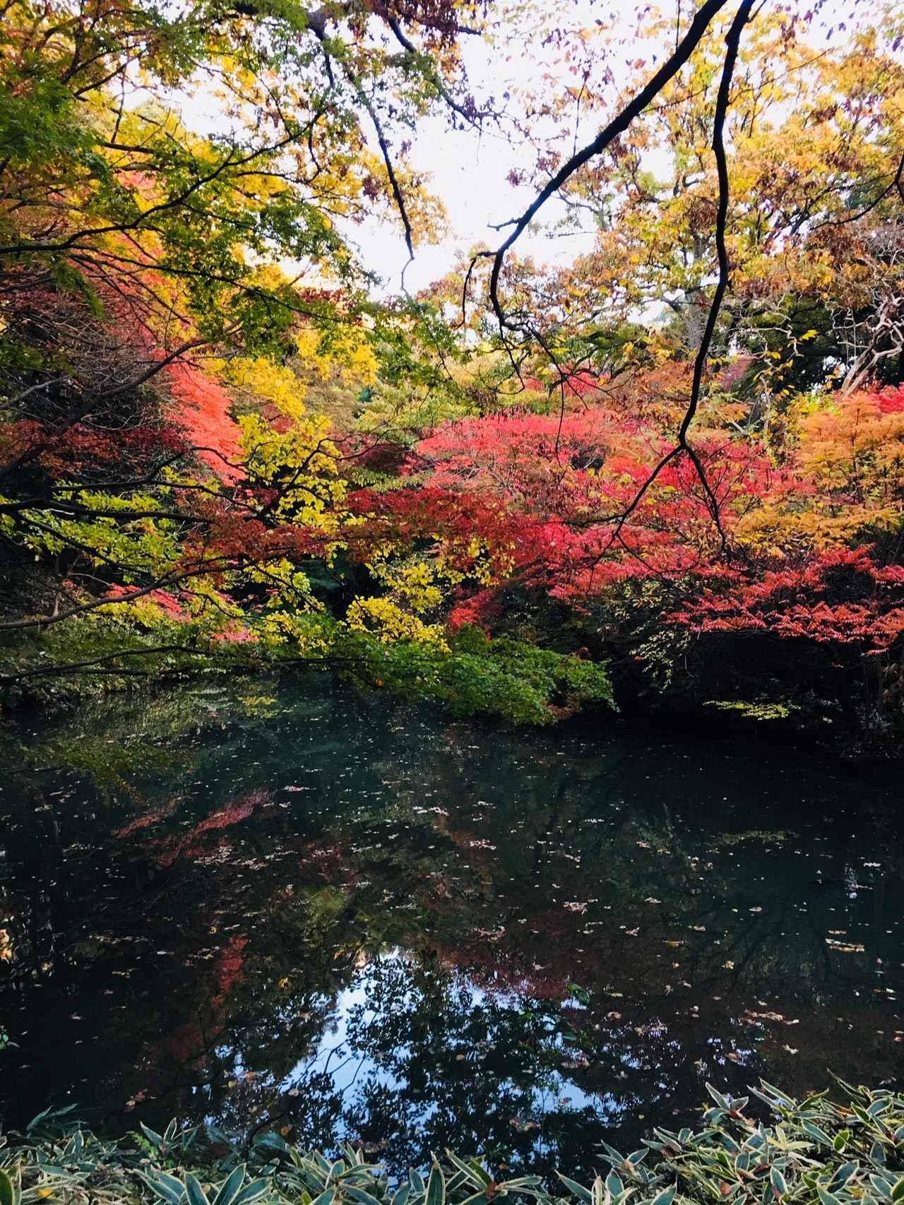 画像1: 日本庭園で秋の自然を満喫