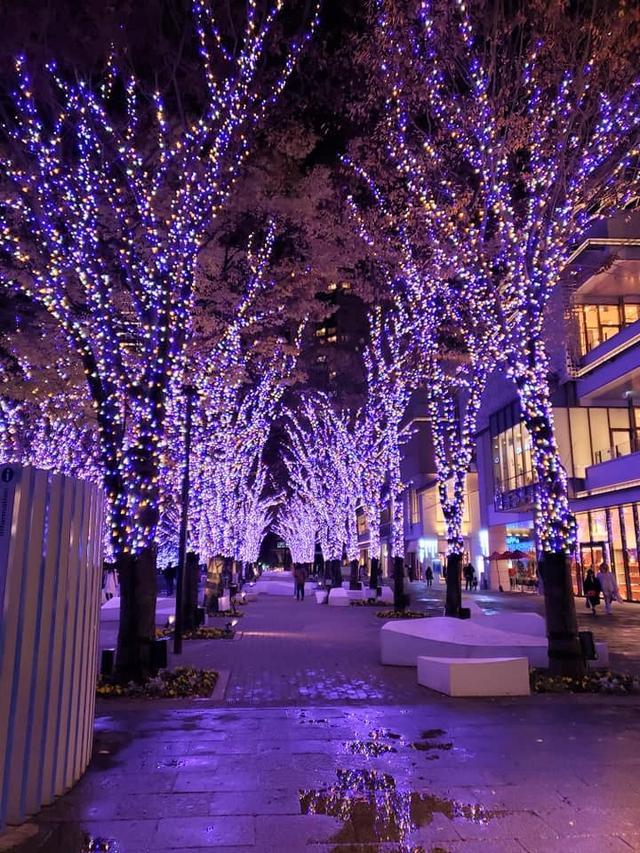 画像1: 横浜エリア最大級のイルミネーション!ヨコハマミライト