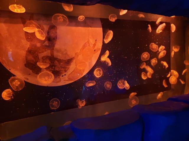 画像1: 神秘的なクラゲの水槽