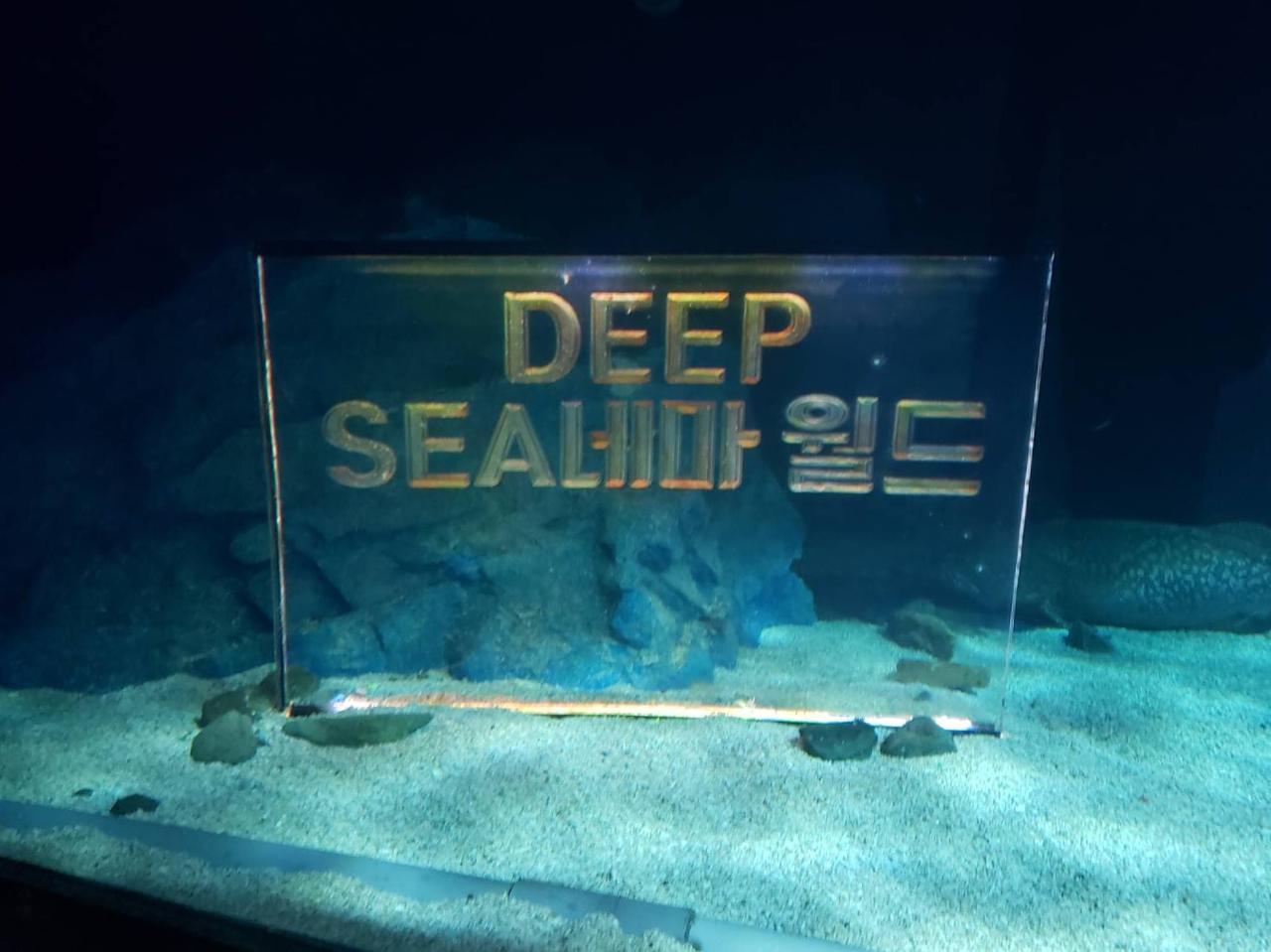 画像2: こんなに巨大な水槽は日本で見たことないくらい⁉