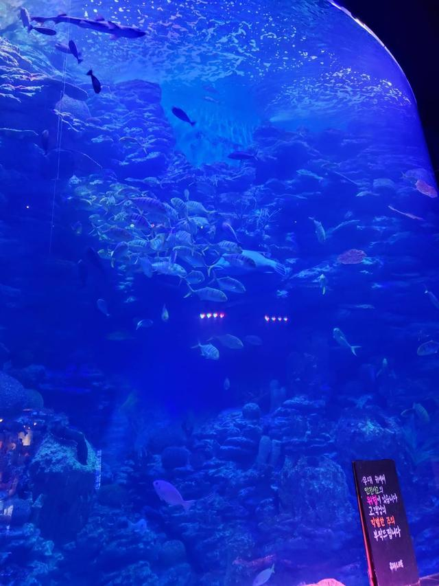 画像1: こんなに巨大な水槽は日本で見たことないくらい⁉