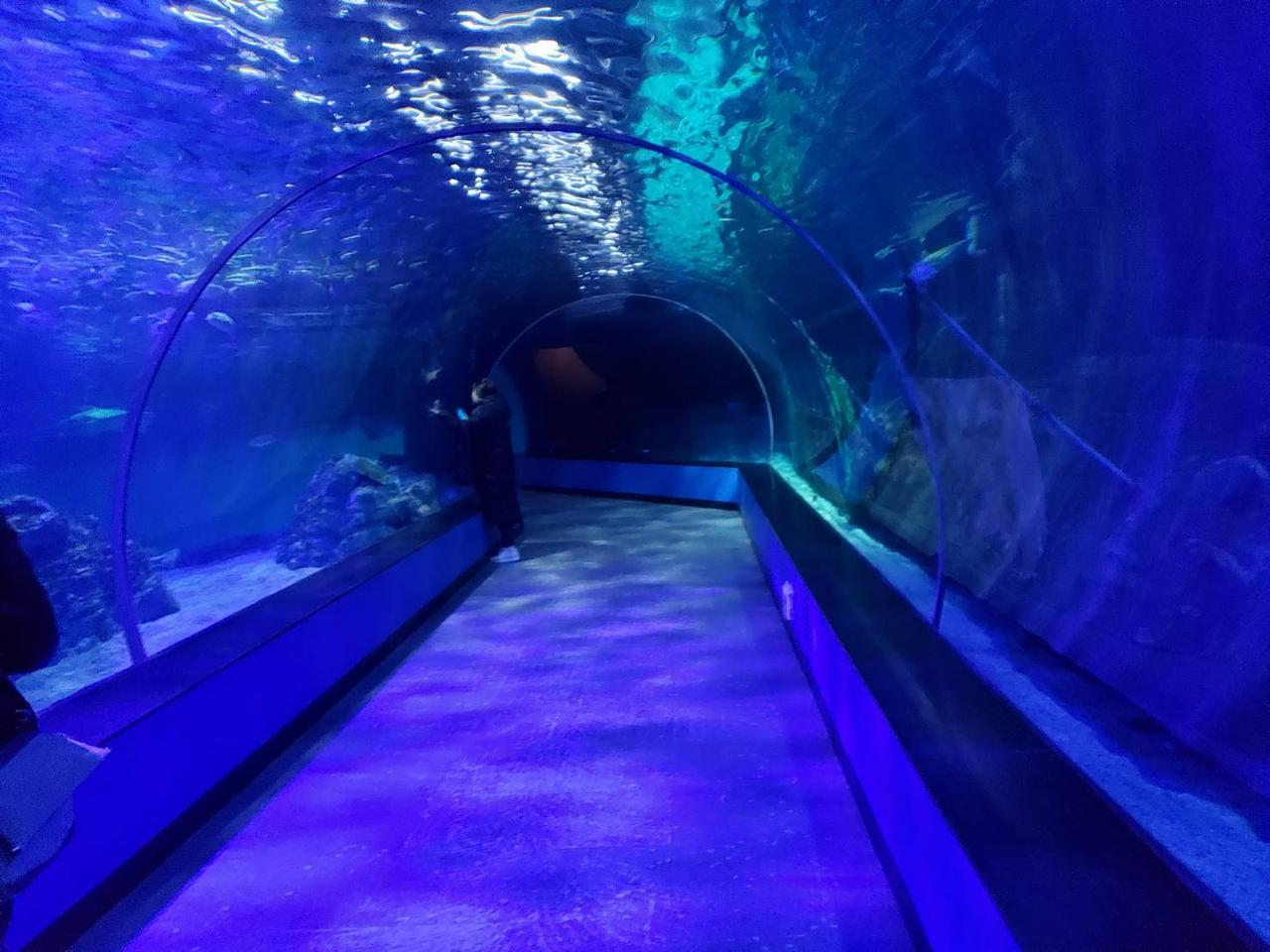 画像: 海底トンネルはまるで海を泳いでいるような気分に!