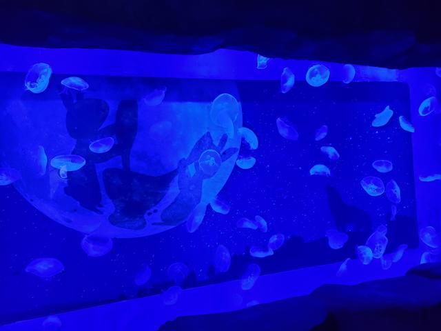 画像2: 神秘的なクラゲの水槽