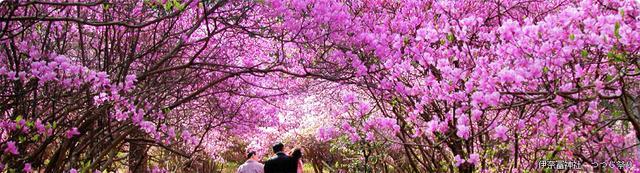 画像: 三重県鈴鹿市を観光するなら すずかし観光ガイド