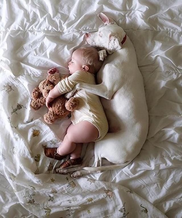 画像10: ワンちゃんの寝ている姿だけを載せる、脱力系インスタアカウントが可愛すぎて癒される