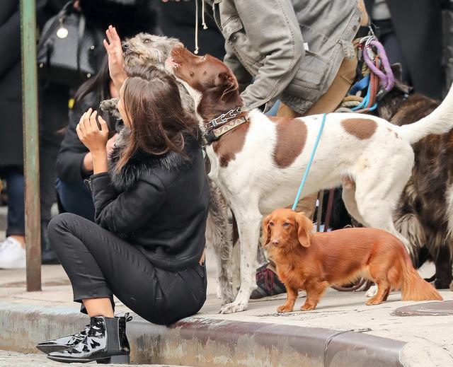画像3: 犬の大群に囲まれてエミリーも大爆笑