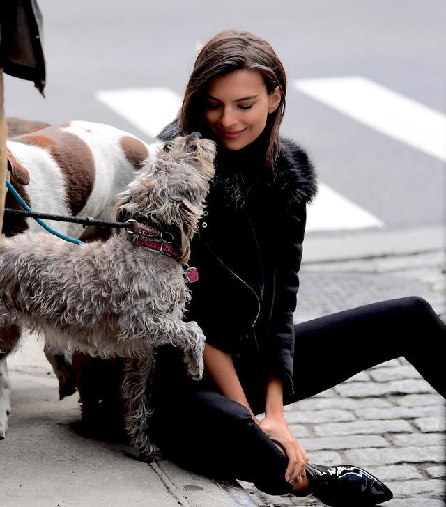 画像6: 犬の大群に囲まれてエミリーも大爆笑