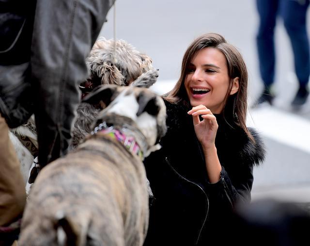 画像5: 犬の大群に囲まれてエミリーも大爆笑