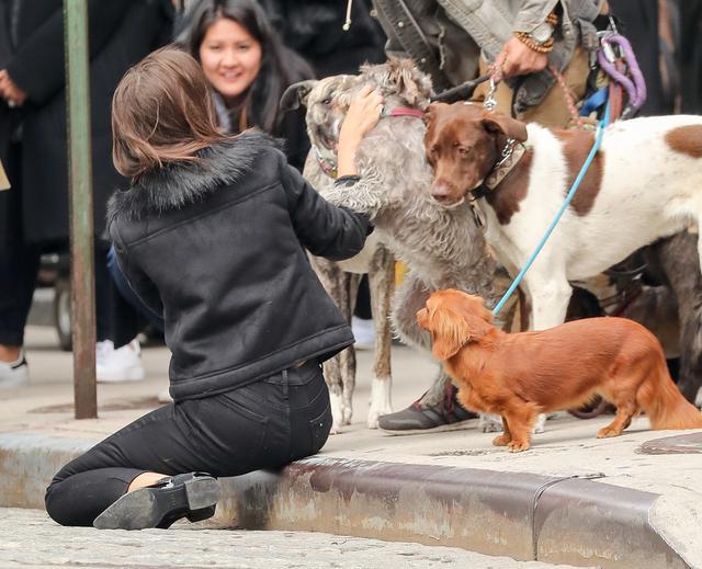 画像4: 犬の大群に囲まれてエミリーも大爆笑