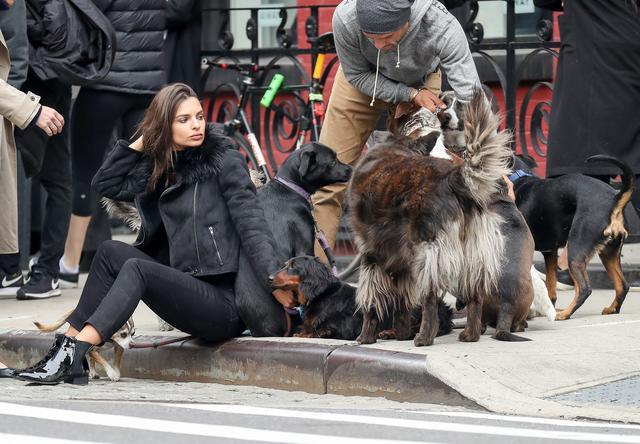 画像2: 犬の大群に囲まれてエミリーも大爆笑