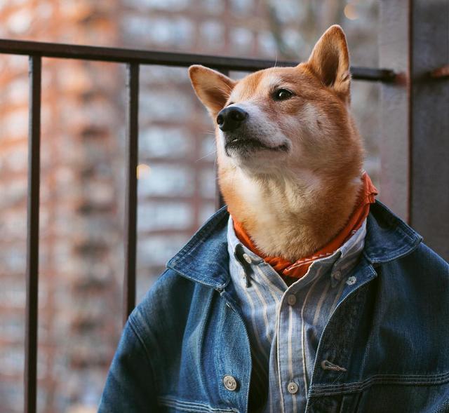 画像: NY在住スタイリッシュ犬