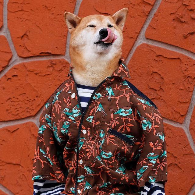 画像6: 着ている服は一流ブランド