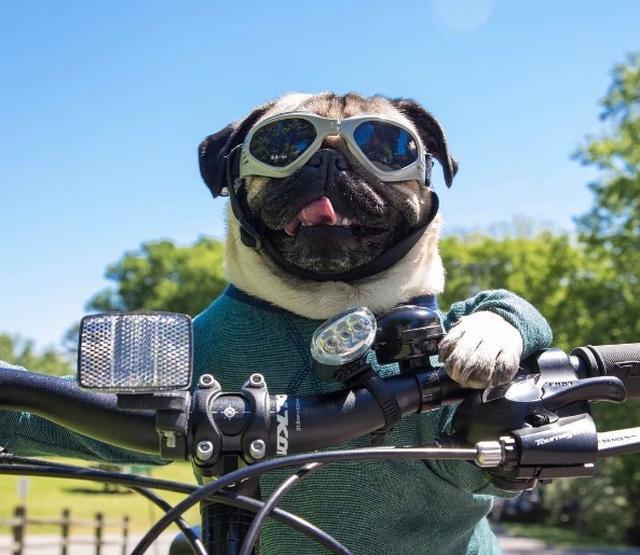 画像1: フォロワー200万以上の世界的インスタグラマー犬