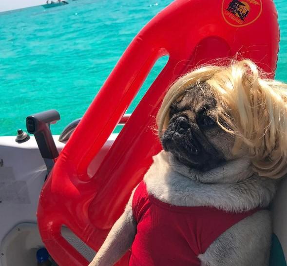 画像2: フォロワー200万以上の世界的インスタグラマー犬