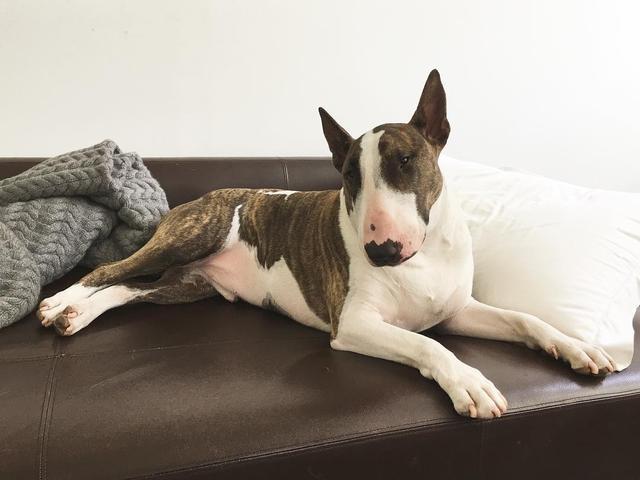 画像9: インスタアカを持っているセレブの愛犬7、フォロワー数ランキング