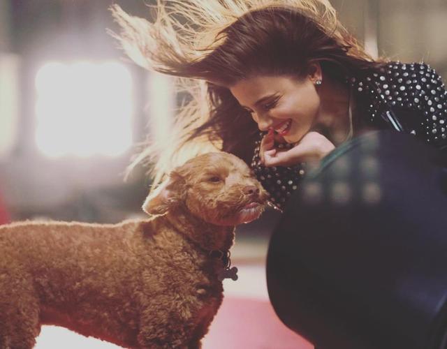 画像2: インスタアカを持っているセレブの愛犬7、フォロワー数ランキング