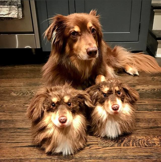 画像1: 愛犬家のアマンダ