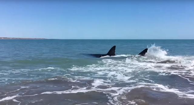 画像2: 4メートル以上のサメが家の前に!あなたはどうする?