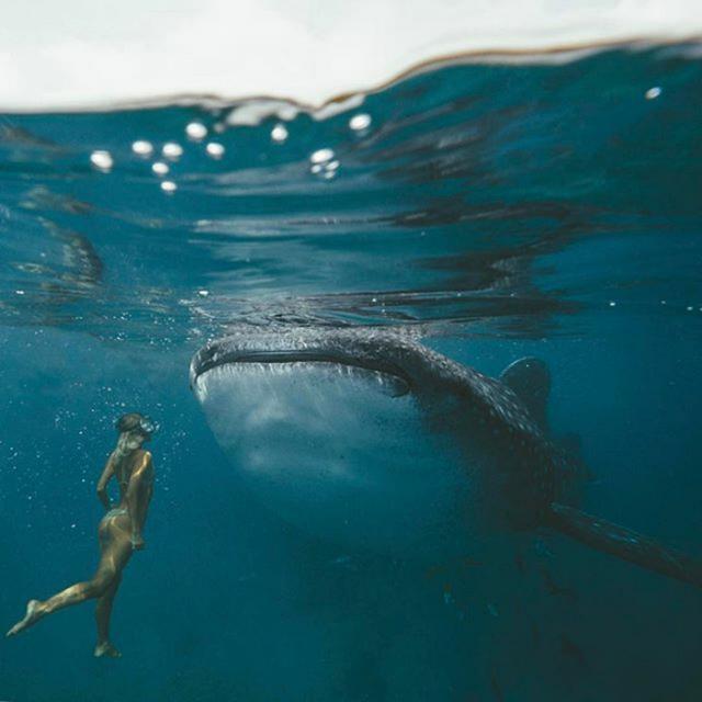 画像: まるで合成かのような巨大クジラとの水中ショット