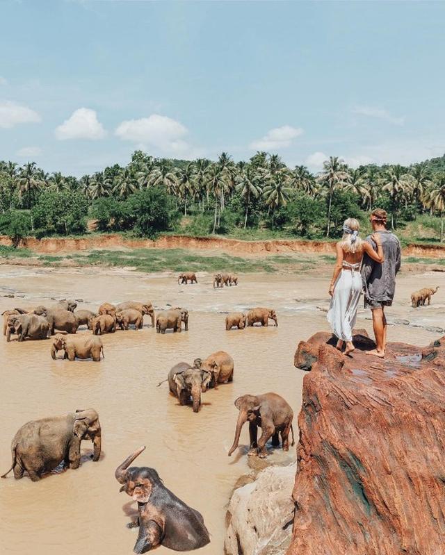 画像: スリランカで水浴び中の象の群れに遭遇